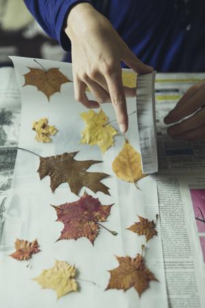 Stapel von bunten Blätter im Herbst Standard-Bild - 50396323