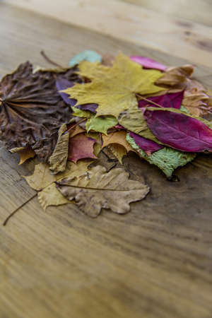 stack of colorful autumn leaves Standard-Bild