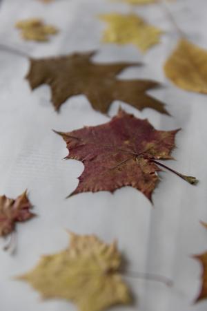 Stapel von bunten Blätter im Herbst Standard-Bild - 50396332