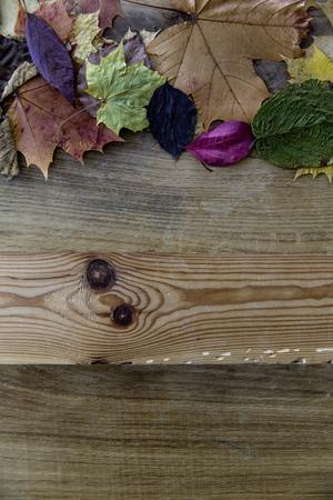 Stapel von bunten Blätter im Herbst Standard-Bild - 50396334
