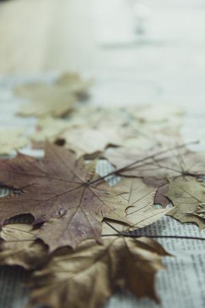 Stapel von bunten Blätter im Herbst Standard-Bild - 50396336
