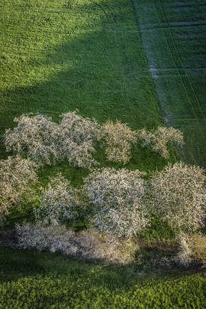 cherry blossom ballooning at upper frankonia bavaria germany
