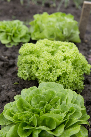 bio self-sufficiency garden salad