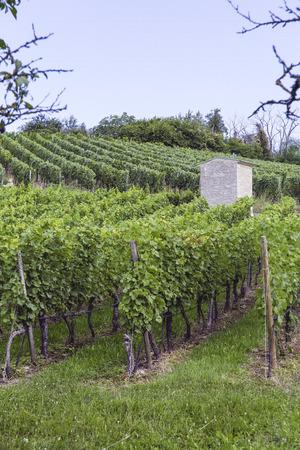 frisch und Landwirtschaft yineyards bio gesteuert