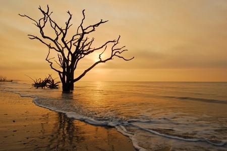 carolina del sur: �rbol en el Oc�ano Surf Charleston, Carolina del Sur Foto de archivo