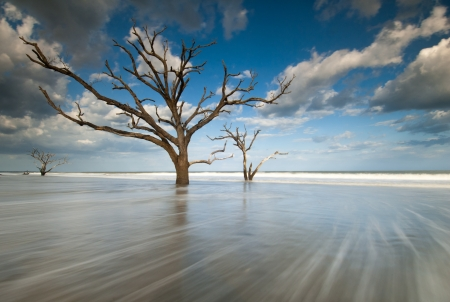 Botany Bay Boneyard Beach, Edisto Island, Charleston photo