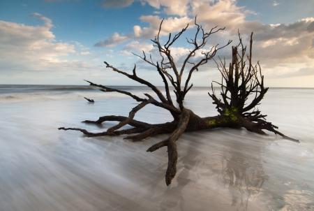 Botany Bay Boneyard Beach, Edisto Island, Charleston photo