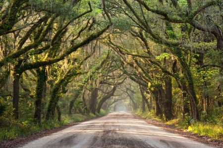 Southern Tree Lined Dirt Road photo