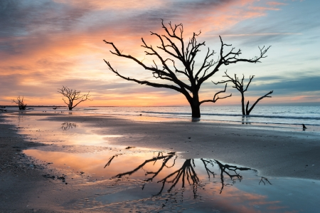 Charleston South Carolina Botany Bay Boneyard Beach Tree Silhouette photo