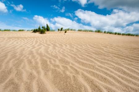 nags: North Carolina Sand Dune Jockey s Ridge State Parque