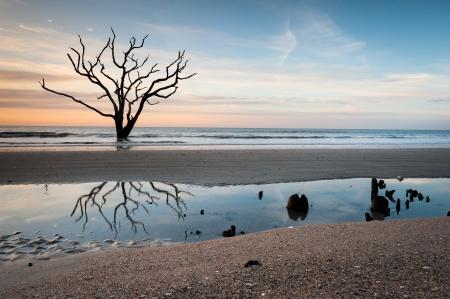 carolina del sur: Charleston Carolina del Sur Edisto Island Botany Bay Boneyard Beach