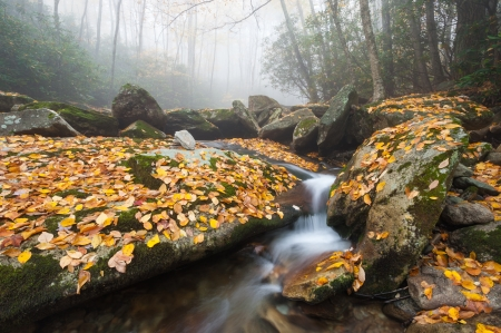 North Carolina Blue Ridge Mountain Foggy Stream Cascade photo