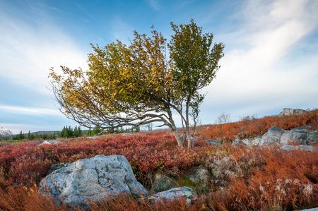 allegheny: West Virginia Dolly Sods Wilderness Area