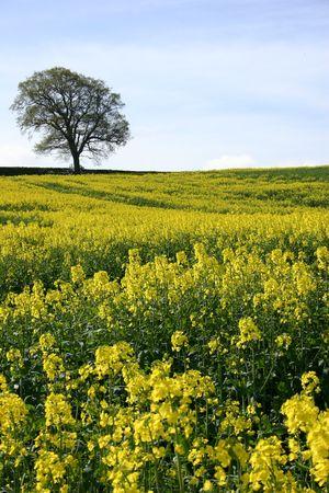 English Countyside Фото со стока - 358840