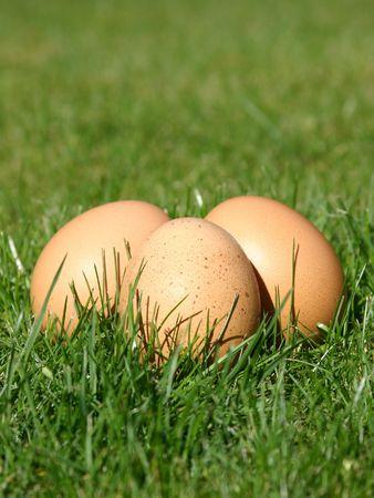 New Laid Eggs Фото со стока - 360695