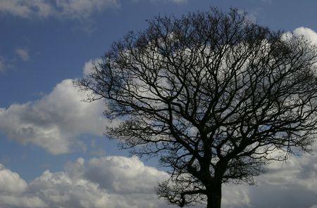 A Tree Without Foliage Фото со стока - 360692