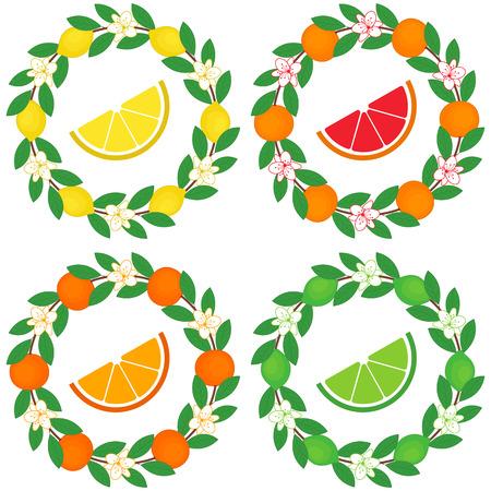grapefruits: Vector citrus wreath - oranges, grapefruits, limes and lemons