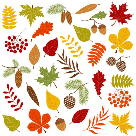 ashberry: Vector autumn set with leaves and berries