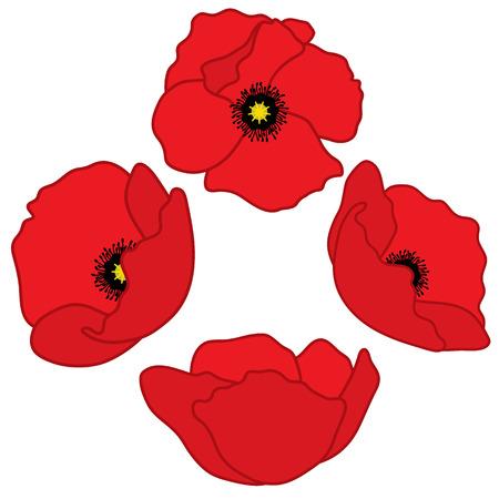 Vector red poppies. Poppy vector illustration. Vectores