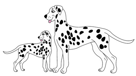 Vector Dalmatian dog. Vector dog. Dalmatian vector illustration.