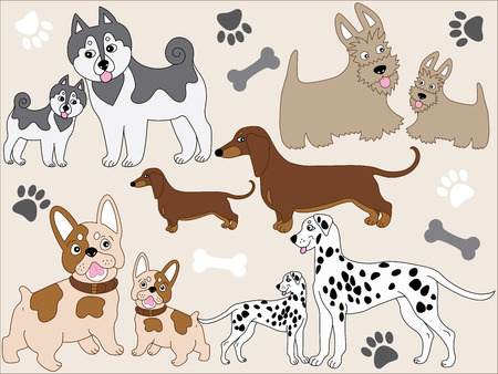 Vector various dogs with puppies - Scottish Terrier, French Bulldog,  Dachshund, Husky, Dalmatian. Vector dogs.  Dogs vector illustration.