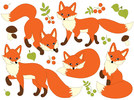 Vector set of cute cartoon foxes, leaves, berries and mushrooms. Vector fox. Foxes vector illustration 向量圖像