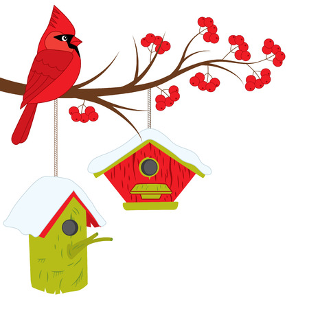 Beautiful cardinal sitting on the rowan tree branch. Cardinal, branch, red berries and birdhouses. Cardinal and winter elements, vector illustration