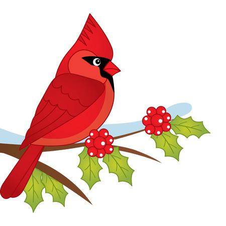 Vector cartoon cardinal sitting on holly tree branch. Vector cardinal. Cardinal vector illustration