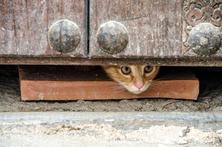 El gato asomó por debajo de la puerta. Foto de archivo