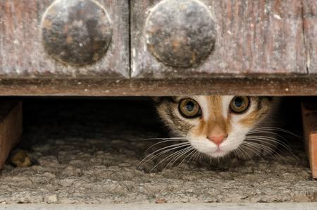 gato asomó por debajo de la puerta