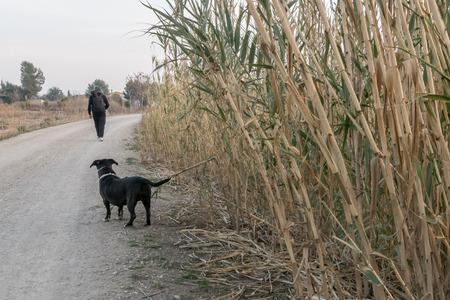 Dog watching as his owner walks away Stock Photo