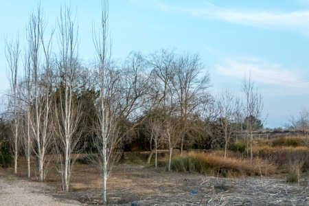 Landscape consequence of the drought