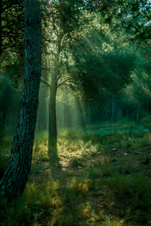 Disturbing light through the trees of the forest