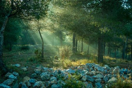 Dawn light go through the trees illuminating the stones of the ground