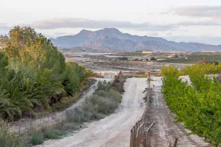 Path between an orchard of apricots with the Sierra de la Pila in the background in Murcia