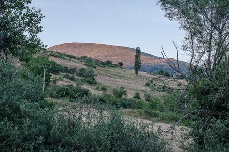 Spain. Forest in the surroundings of Herreruela de Castilleria. Palencia 版權商用圖片