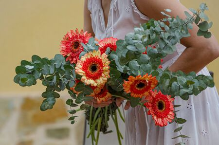 Bouquet of gerberas in the arms of a woman.
