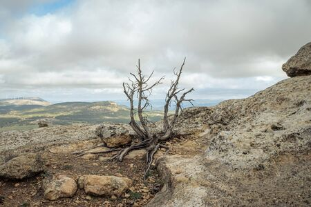 Dry vegetation on the rock with storm sky 写真素材