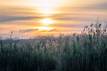 Spain. Sunrise in the El Hondo de Elche natural park. Alicante