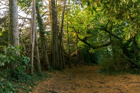 Forest on Bender Island in the Gulf of Morbihan. France