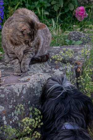 Dog and cat look at each other with curiosity