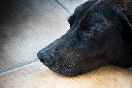 Portrait of black dog sleeping peacefully