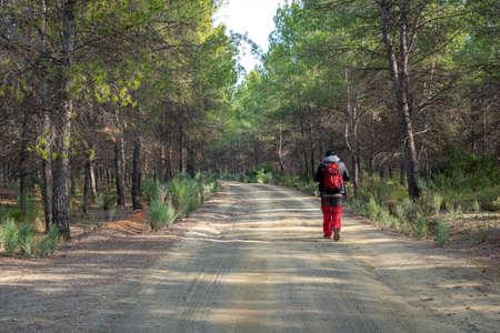 Hiker man walks in pine forest in the Murcia region. Spain