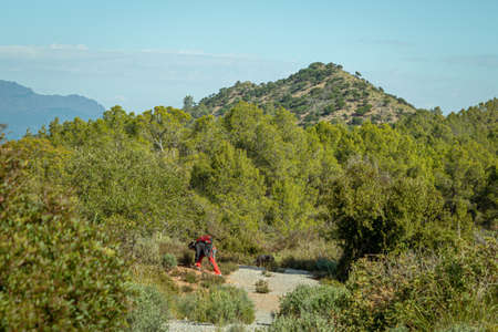 Man tying his boots in the pine forest in the Murcia region. Spain.-