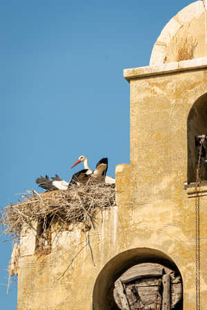 Stork on top of the church steeple.-