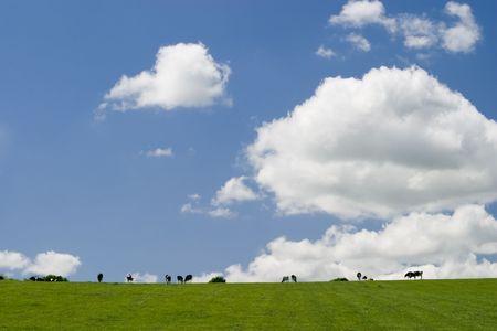 Summer landscape Stock Photo - 1311854