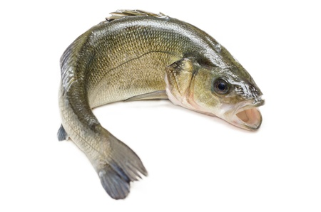 bass: Fresh sea bass Stock Photo