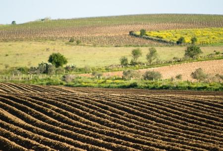 furrows: Plowed field outdoor in Sardinia