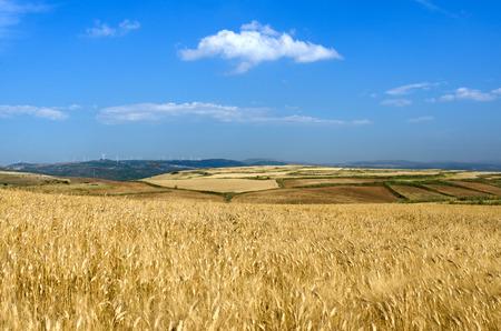 Sardinia, wheat field