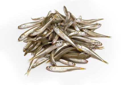 whitebait: Bunch of fresh whitebait, fresh fish Stock Photo